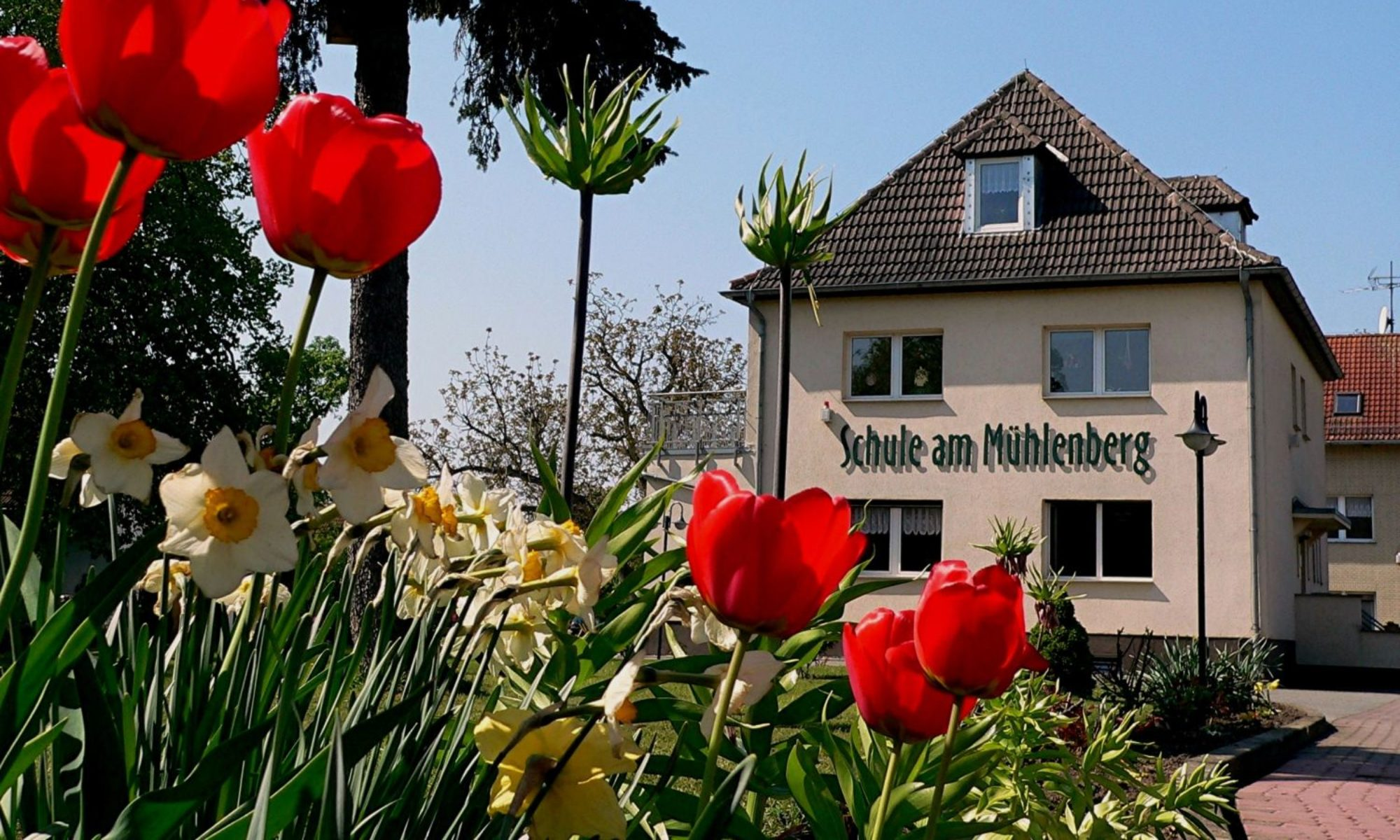 Schule am Mühlenberg